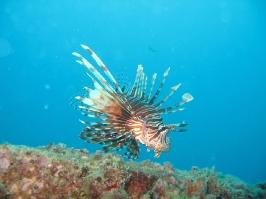 Thailand 2006 - Unterwasser-Impressionen